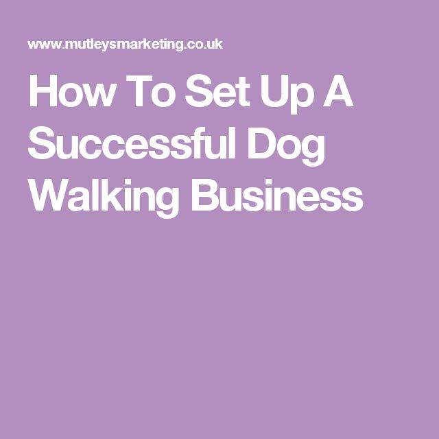 How To Set Up A Successful Dog Walking Business Success