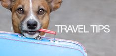 4 Hotel Chains Where Dogs Stay for Free | i Love Dog-Friendly - Premier Dog-Friendly Travel Guide
