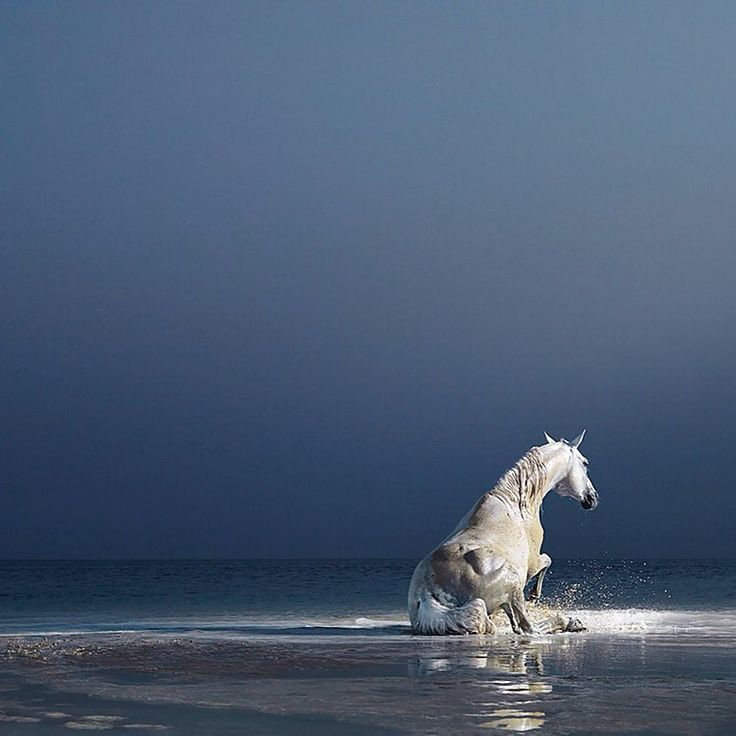 Photo by Tim Flach. @timflachphoto #horse #beach #water #sky #epic #mood #waves #foam