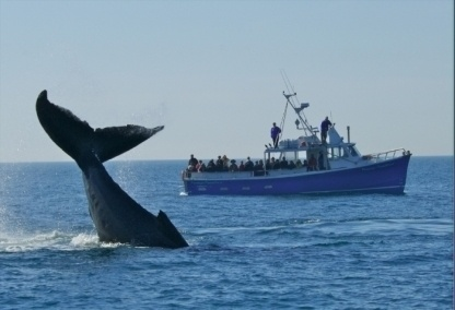 .~Whale watching, Nova Scotia. I've actually done this and it is truly amazing~. @adeleburgess