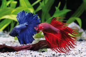 Afbeeldingsresultaat voor tropische vissen soorten