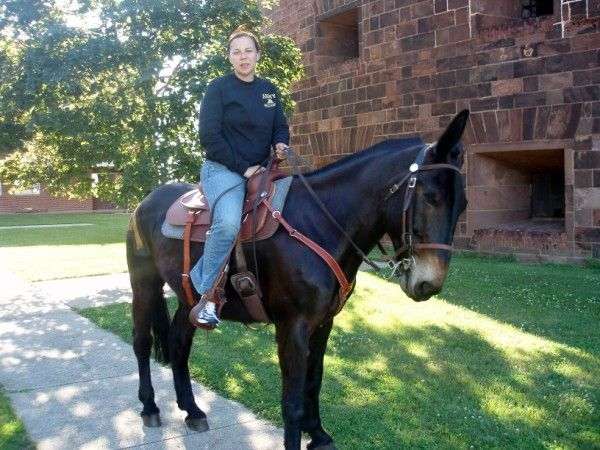 ARMY MULES AT WEST POINT. We went to Governors Island in New York City for a Civil War reenactment. I'm Riding General Scott.     Courtesy: Greg Krenzelok, U.S. Army Veterinary Corps Preservation Group, Researcher & Historia (USA).