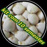 nozes da india 1 pacote com 10 sementes