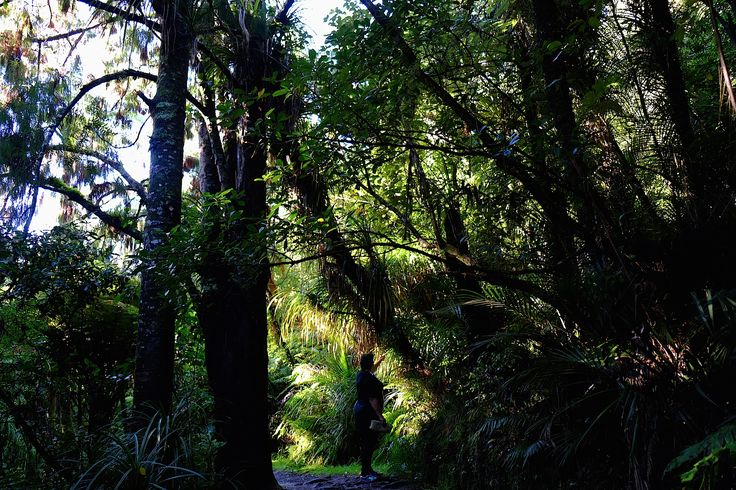 We went bush to learn about rongoā—the indigenous medical practices of Māori using New Zealand's natural resources.