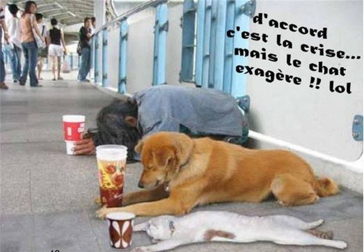Chien chat drole