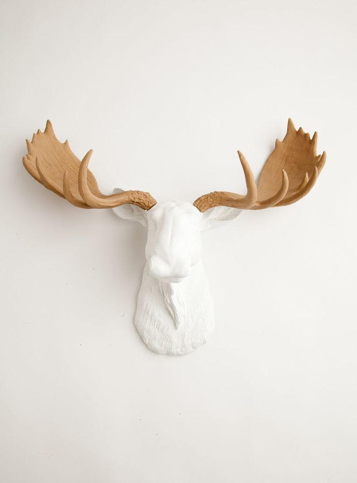 White w/ Tan Antlers Resin Moose Head