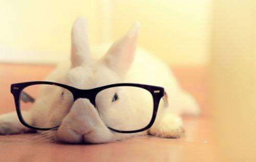bunny, big glasses
