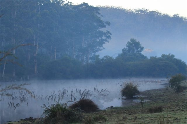 A misty morning at Channybearup, Western Australia....Taken by Daphne Greenhow