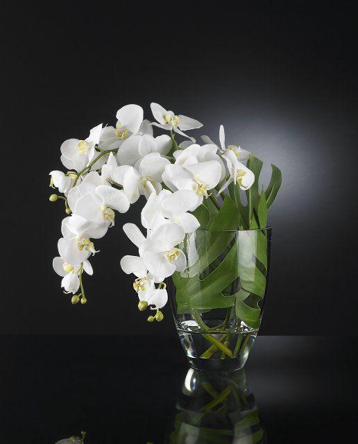 VG NEW TREND Kompozice orchideí