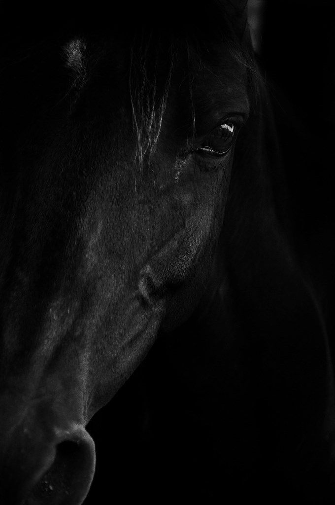 """I am still under the impression that there is nothing alive quite so beautiful as ah horse"