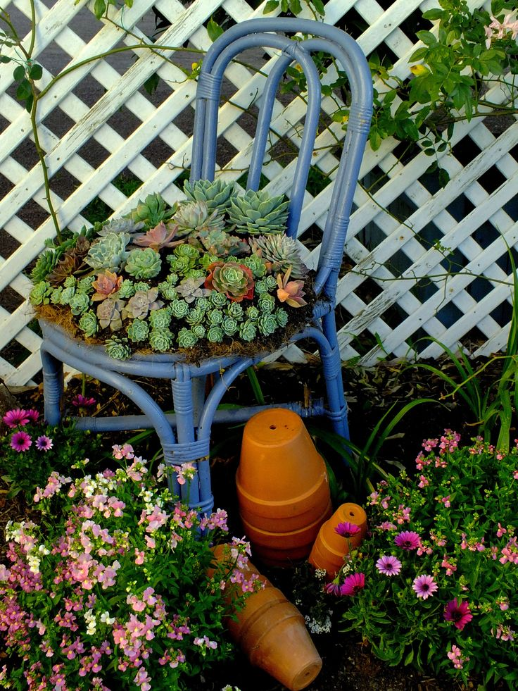 An old cane chair upcycled into a flower pot stand!  Full of Echeveria's!