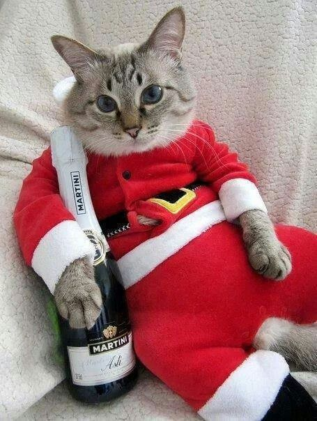 49 best christmas kitties images on pinterest christmas animals party time spiritdancerdesigns Choice Image