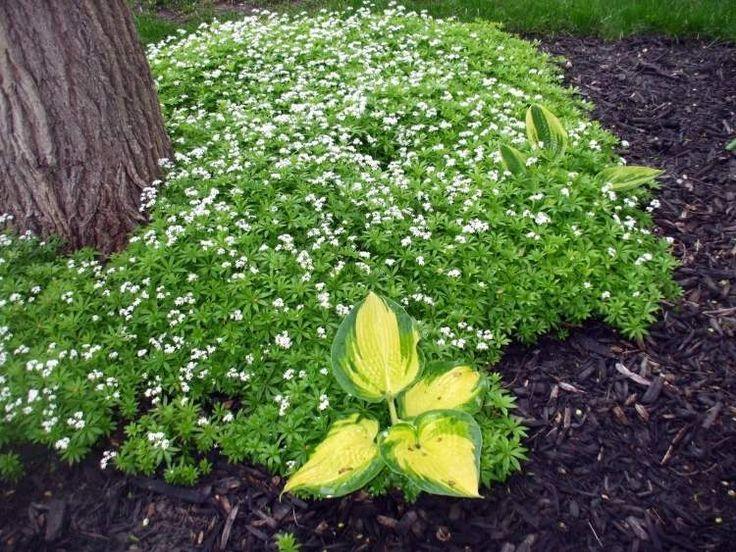Les 25 meilleures idées concernant plantes dombre de jardin sur ...