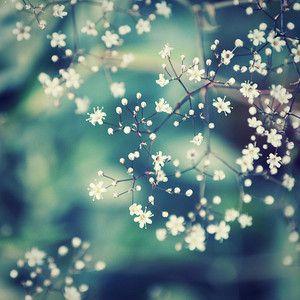White Flowers Tumblr Google Da Ara Pinterest Search