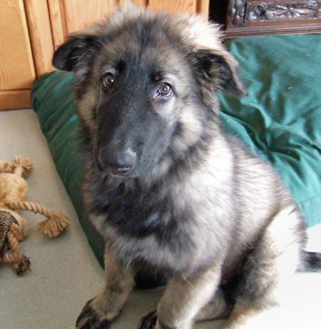Dog fighting victim s story
