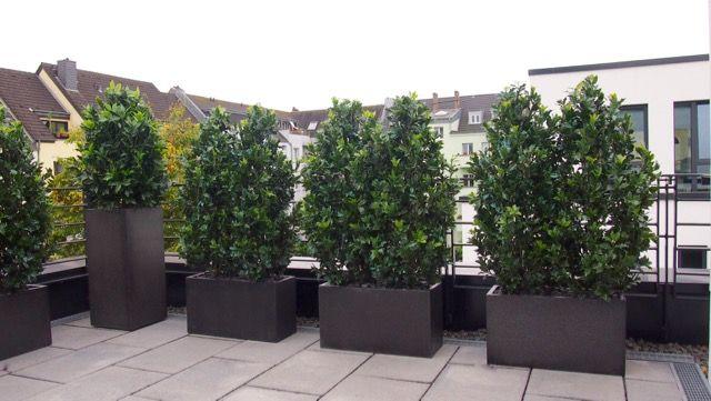Pin Von Bella Planta Auf Jardines Garten Landschaftsbau Kunstpflanzen Hintergarten