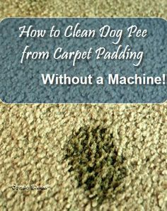 How to Clean Dog Pee from Carpet WITHOUT a Carpet Cleaning Machine
