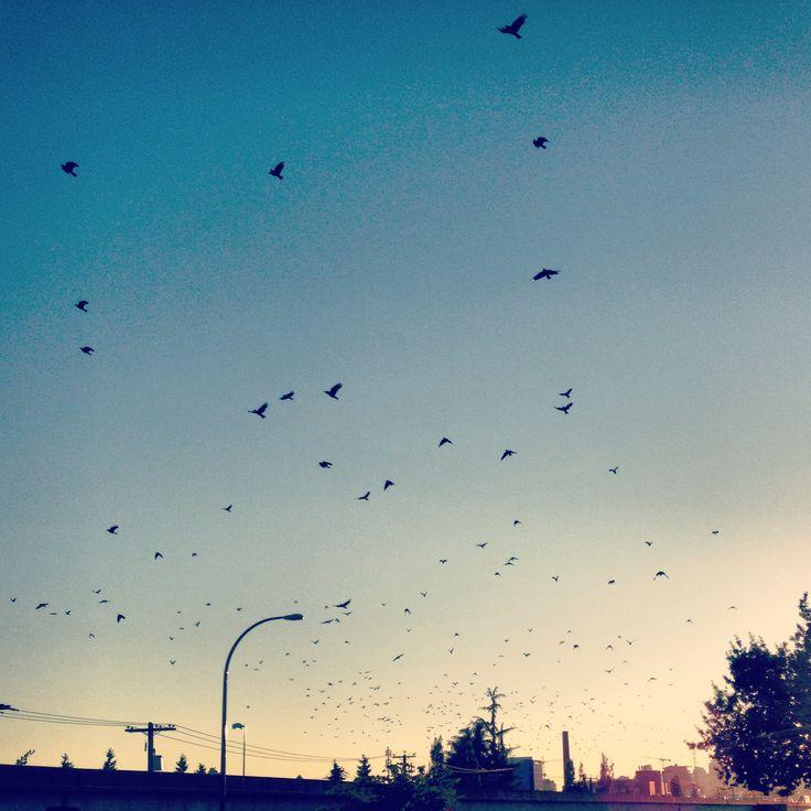 Birds in flight pt2
