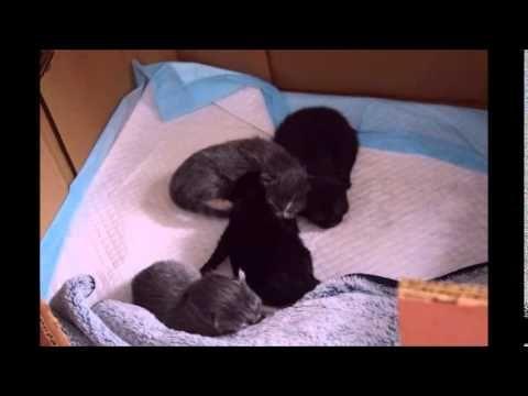 Cute pile of squirmy newborn kittens!