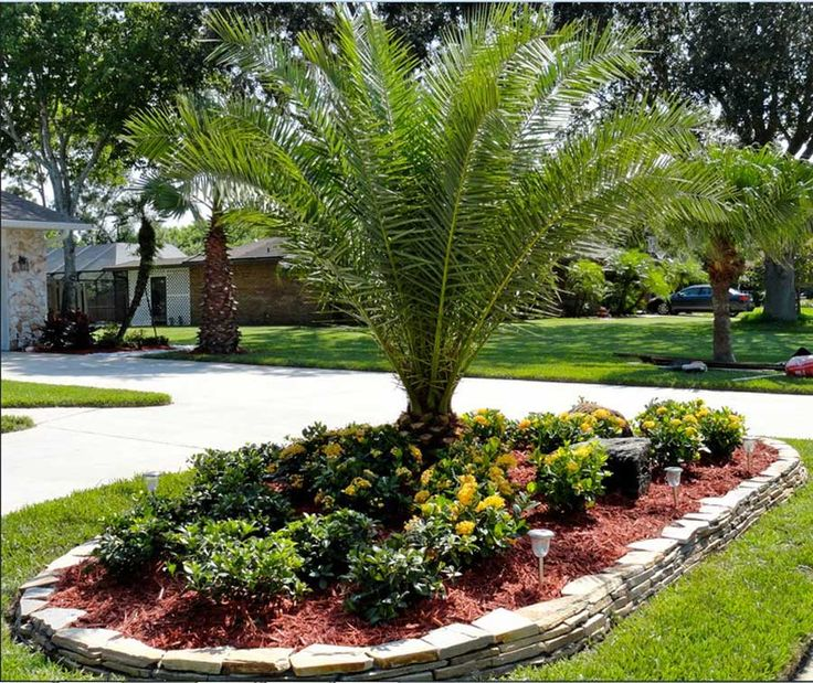 Front yard design ideas palmtrees canary island date palm for Tree landscaping ideas