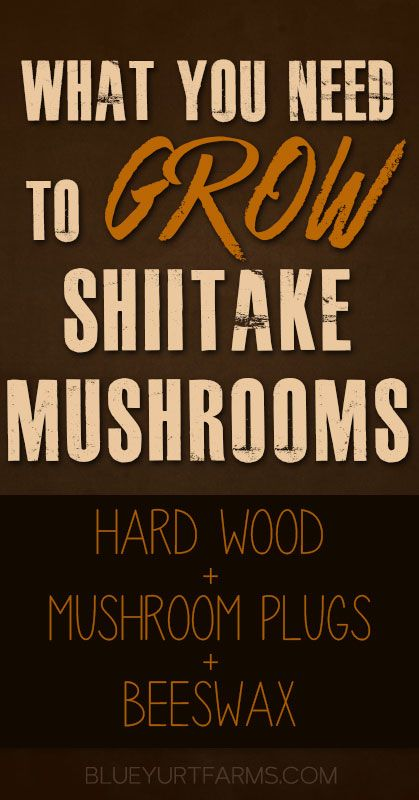 What You Need to Grow Shiitake Mushrooms -- Blue Yurt Farms