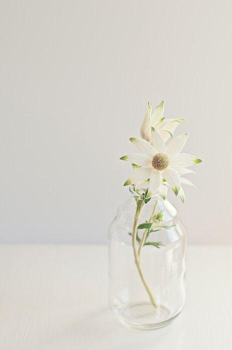 Flannel Flowers in a simple vase. #littleflannelflowershop