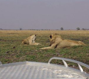Lion-watching by boat on the Busanga Plains  #Safari #Africa #Zambia #WildernessSafaris