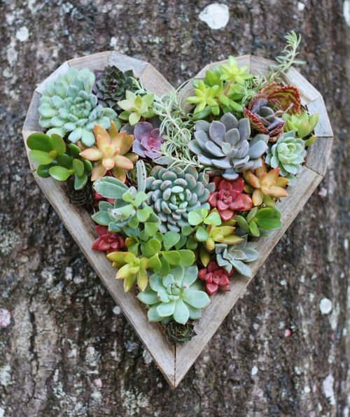 heart shaped pot with succulents