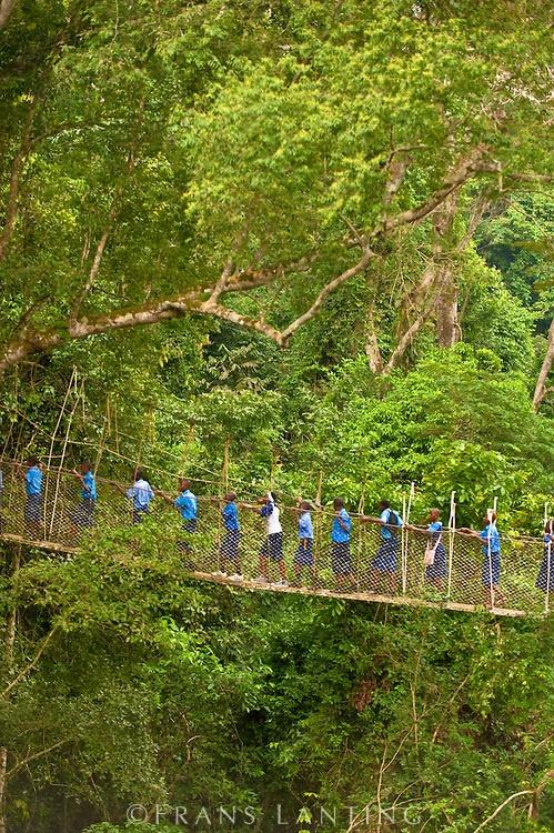 Schoolchildren on canopy walkway in tropical rainforest, Kakum National Park, Ghana
