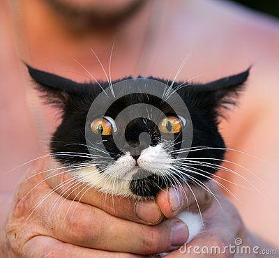 lovely kitten in the loving owner's hands.