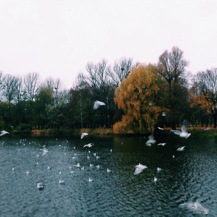 """""""Кормление чаек. Это забавное зрелище:) Их очень много на озере, все кричат, шумят, просят, ааааа...дикие птицы #vsconature #autumn #vscocam #vsco #nature…"""""""