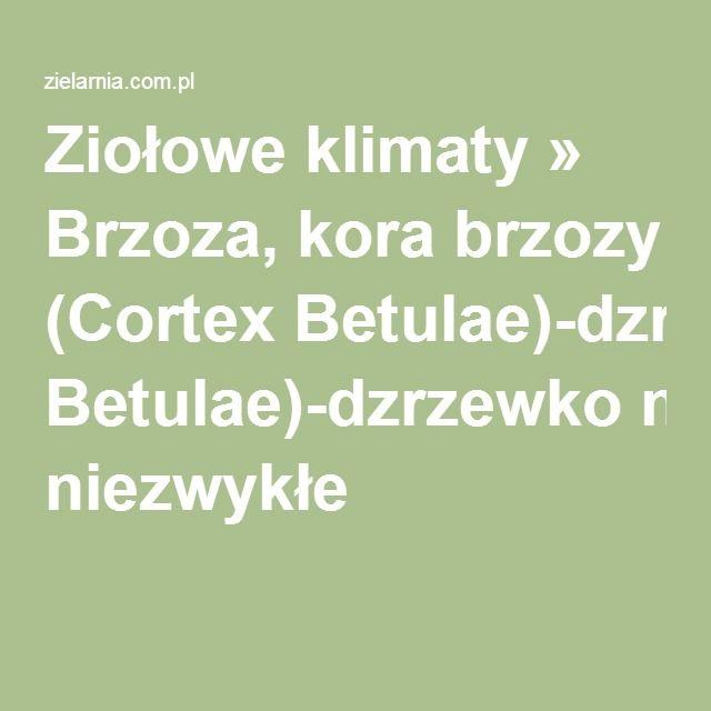 Ziołowe klimaty » Brzoza, kora brzozy (Cortex Betulae)-dzrzewko niezwykłe