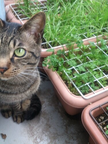 catgrass and he the cat