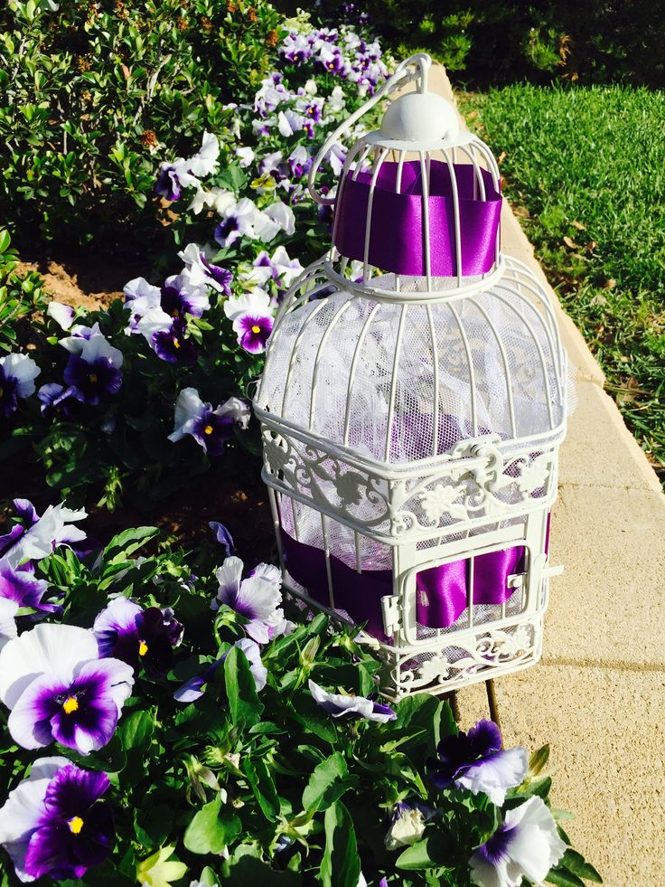 The butterfly cage ....... For the realist of the butterflies &  reading