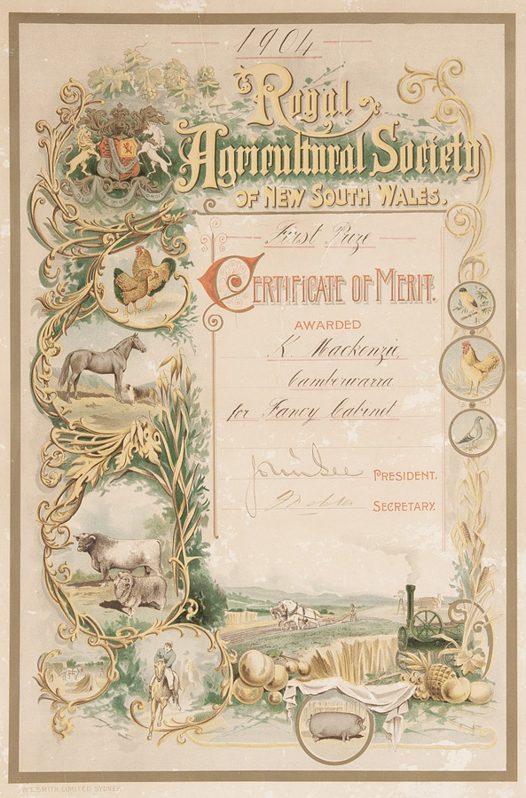 First prize 'Certificate of merit' from the Royal Agricultural Society of NSW, awarded to Kenneth McKenzie, Cambewarra, for making a 'Fancy Cabinet', Sydney, 1904. Meroogal Collection, Historic Houses Trust of NSW [M86/1767]. Photograph Rob Little.