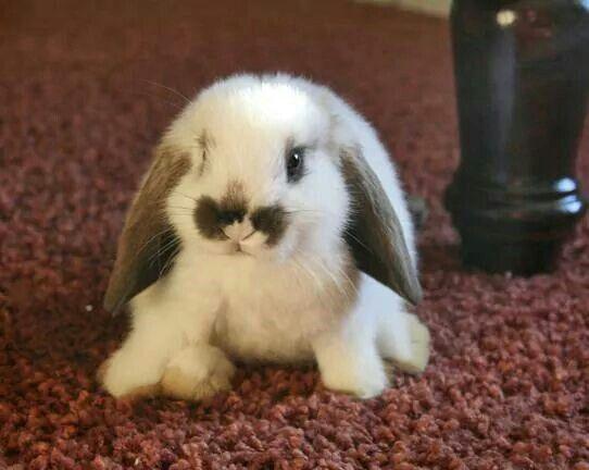 It looks like a stuffed animal!! So cute