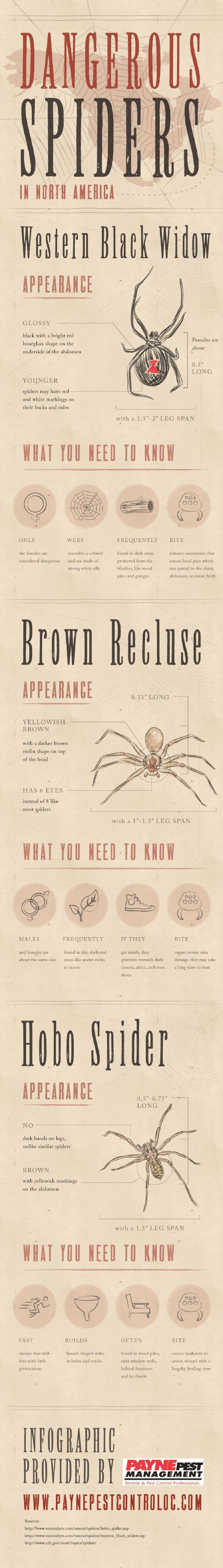 The hobo spider is a fast runner that will bite with little provocation. The bite causes moderate to severe wounds with a lengthy healing time. Learn more about dangerous spiders by checking out this infographic from a pest control company located in Orange County.