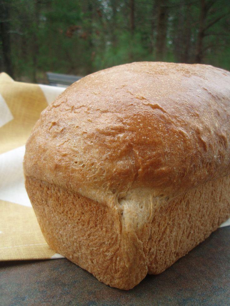 Easy whole wheat bread maker recipe