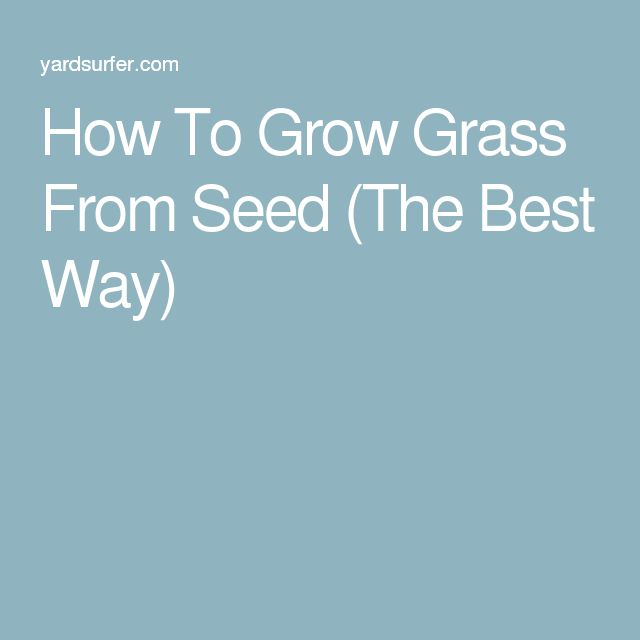 How To Grow Grass From Seed (The Best Way)