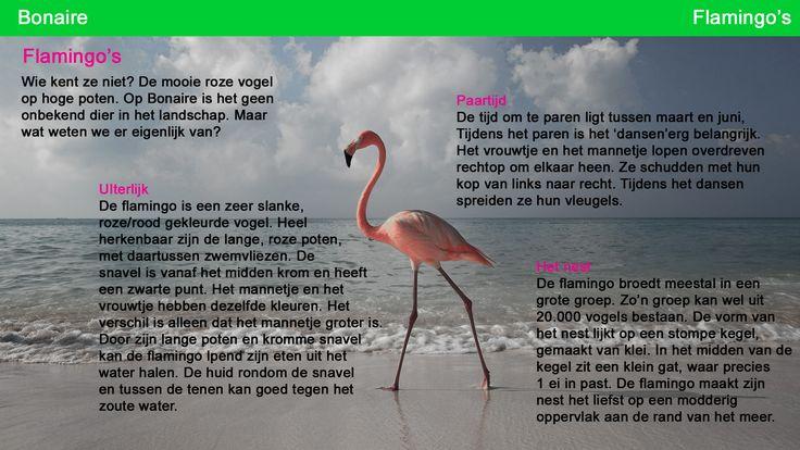 Kaart voor het zelfstandig werken Flamingo 1