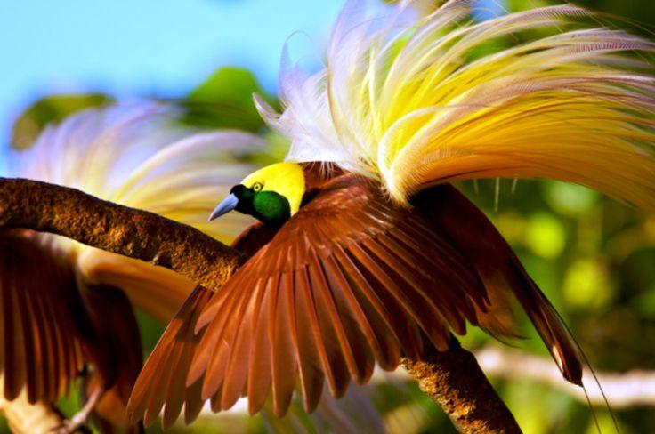 Pernik Dunia - Gambar Pemandangan Alam Yang Indah