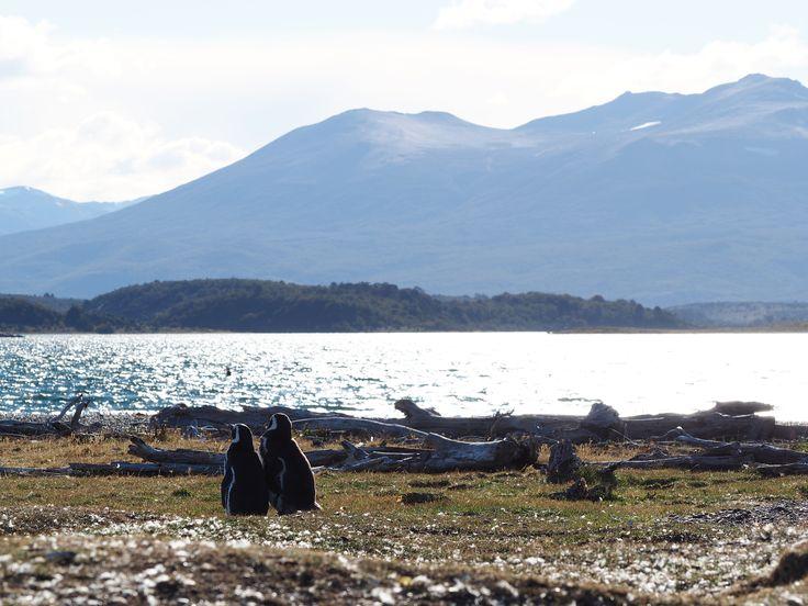Penguin lovers, Ushuaia