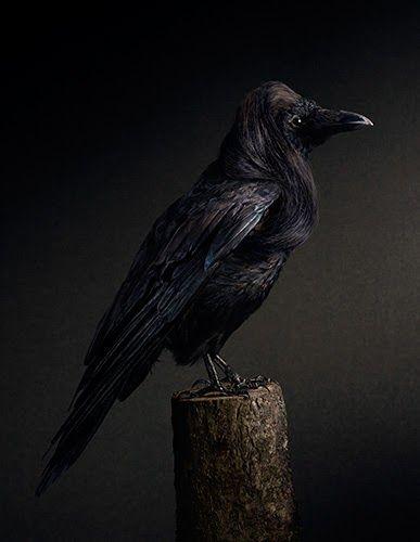 Desafio Criativo: Aves e Seus Penteados Extravagantes