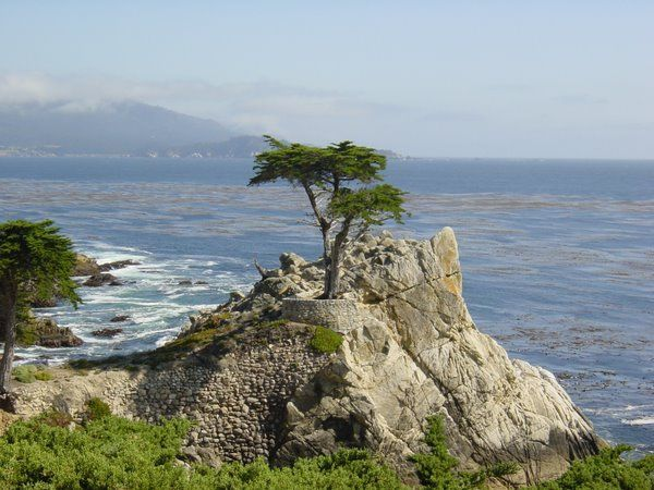 The Lone Cypress along 17 Mile Drive