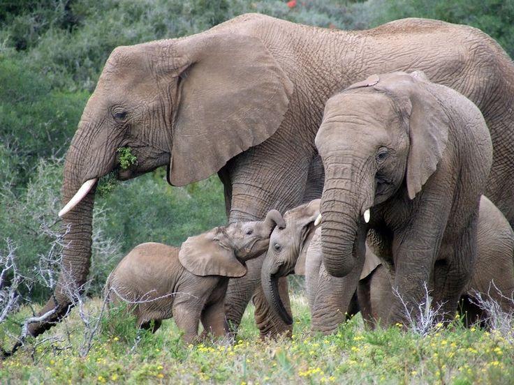 Elephant Family Time