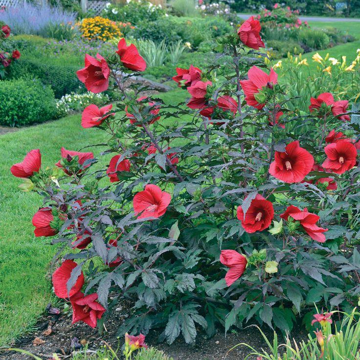 50 Best images about Sanguine Garden on Pinterest