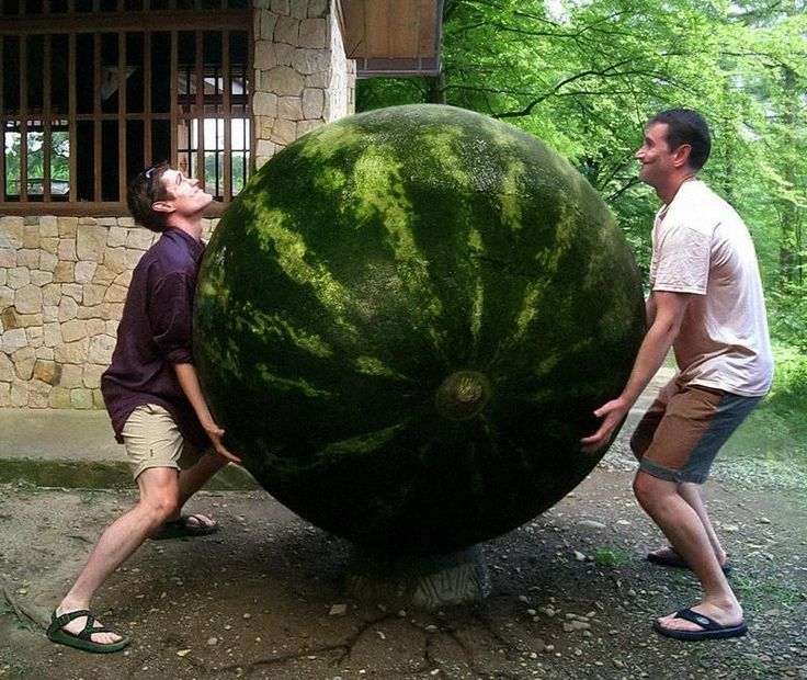 Giant Watermelon