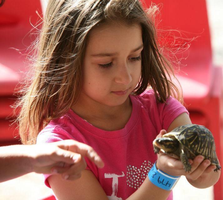 Baby Turtles, Special Needs, Children, Animals, Kids, Animales, Animaux,  Animal, Infants