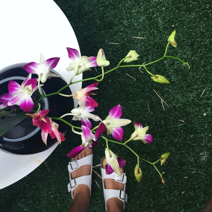 Birkenstocks & Orchids ♡ @bella_luciani #birkenstocks #orchids #pretty