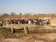 Crocodile in Nigeria